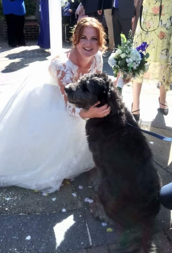 Wedding Day Woofs Dogs at weddings in Dorset